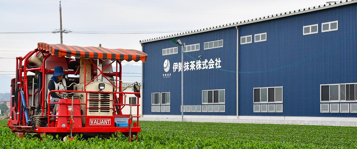 鈴鹿市の茶農家、伊勢抹茶株式会社です。本物の抹茶のおいしさを、地元や日本中の人にもっと知ってほしい。